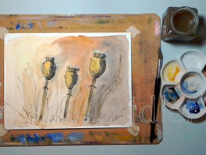 Poppy Heads in Pen and Wash