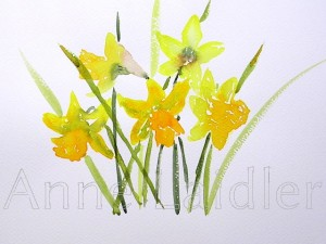 A Host of Daffodils